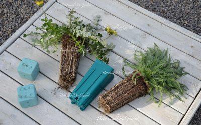 BotanicalDryGarden alla Rotonda di Decima
